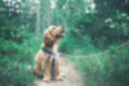 adorable-animal-canine-1254140_edited.jp