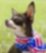 celebrating-4th-july-your-pets-firework-safety-497615283_edited.png