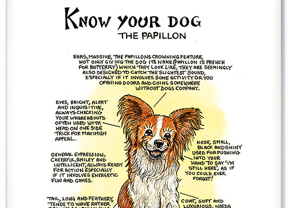 Papillion - 3D Wall Plaque - Know Your Dog - Pack of 6