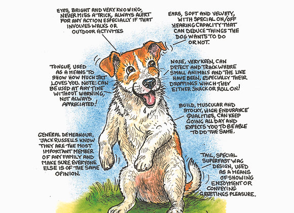 Jack Russell Turbo - Greetings Card - Know Your Dog - Pack of 6
