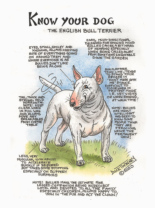 English Bull Terrier - Wall Plaque - Know Your Dog - Pack of 6