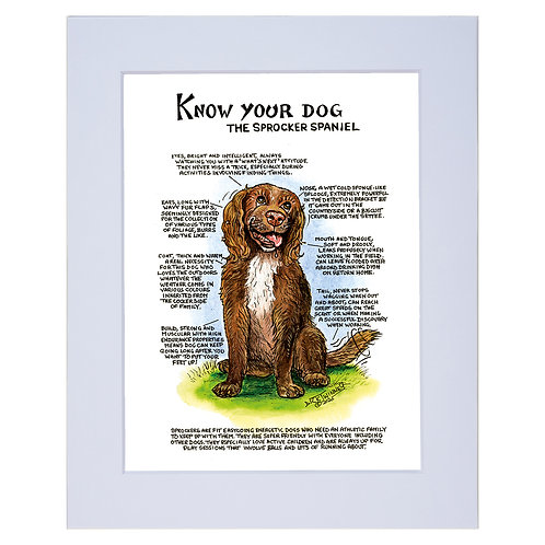 Sprocker Spaniel - A4 Mounted Print - Know Your Dog - Pack of 6