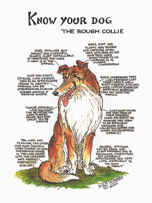 Rough Collie - Wall Plaque - Know Your Dog - Pack of 6