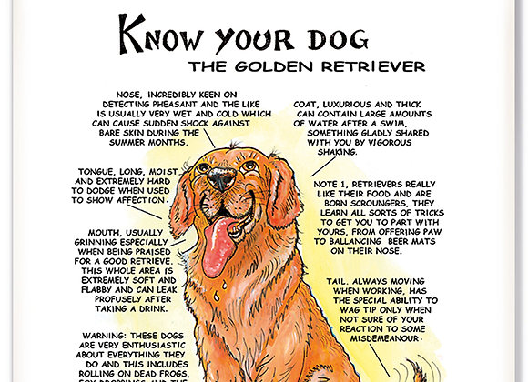 Golden Retriever - 3D Wall Plaque - Know Your Dog - Pack of 6