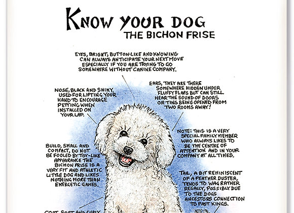 Bichon Frise - 3D Wall Plaque - Know Your Dog - Pack of 6
