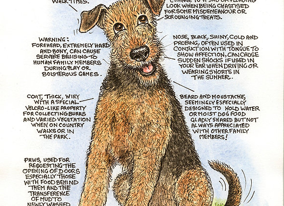 Airedale - Wall Plaque - Know Your Dog - Pack of 6