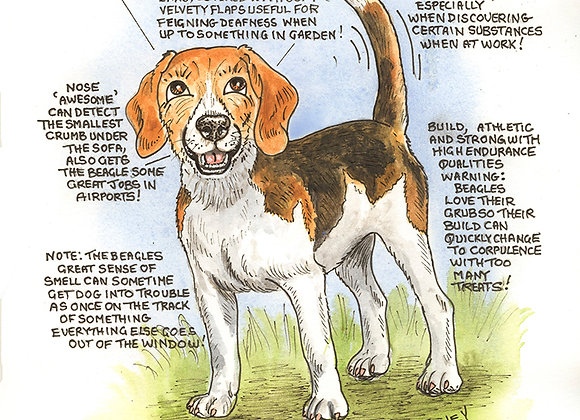 Beagle - Wall Plaque - Know Your Dog - Pack of 6