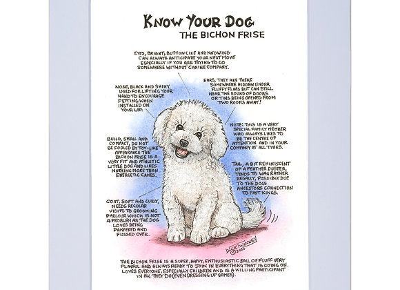Bichon Frise - A4 Mounted Print - Know Your Dog - Pack of 6