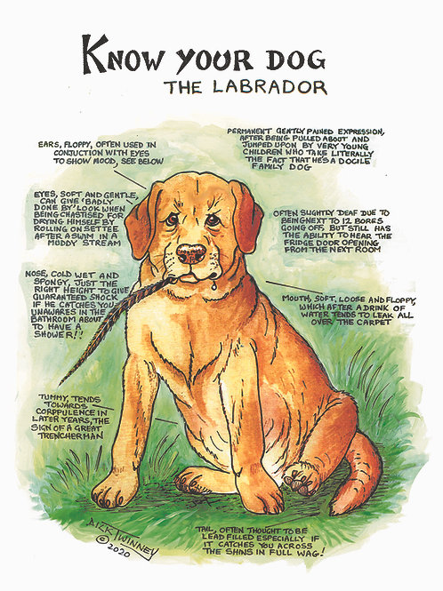 Labrador - Wall Plaque - Know Your Dog - Pack of 6