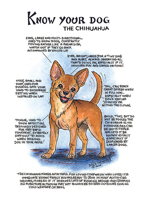 Chihuahua - Wall Plaque - Know Your Dog - Pack of 6