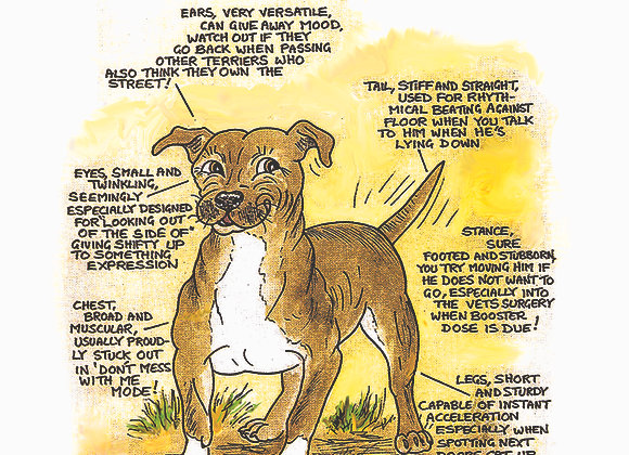 Staffordshire Bull Terrier - Wall Plaque - Know Your Dog - Pack of 6