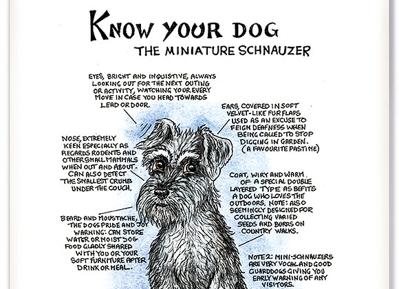 Miniature Schnauzer - 3D Wall Plaque - Know Your Dog - Pack of 6