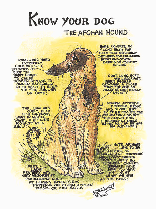 Afghan Hound - Greetings Card - Know Your Dog - Pack of 6