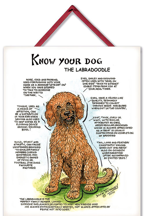 Labradoodle - 3D Wall Plaque - Know Your Dog - Pack of 6