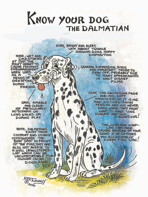 Dalmation - Wall Plaque - Know Your Dog - Pack of 6