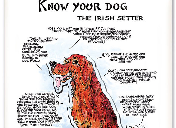 Irish Setter - 3D Wall Plaque - Know Your Dog - Pack of 6