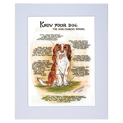 Kings Charles Spaniel  - A4 Mounted Print - Know Your Dog - Pack of 6