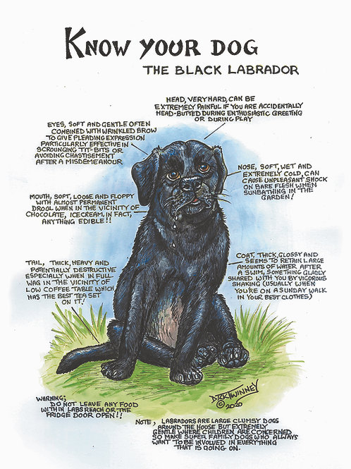 Black Labrador - Wall Plaque - Know Your Dog - Pack of 6
