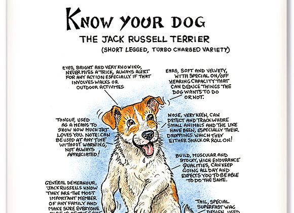 Jack Russell Turbo - 3D Wall Plaque - Know Your Dog - Pack of 6
