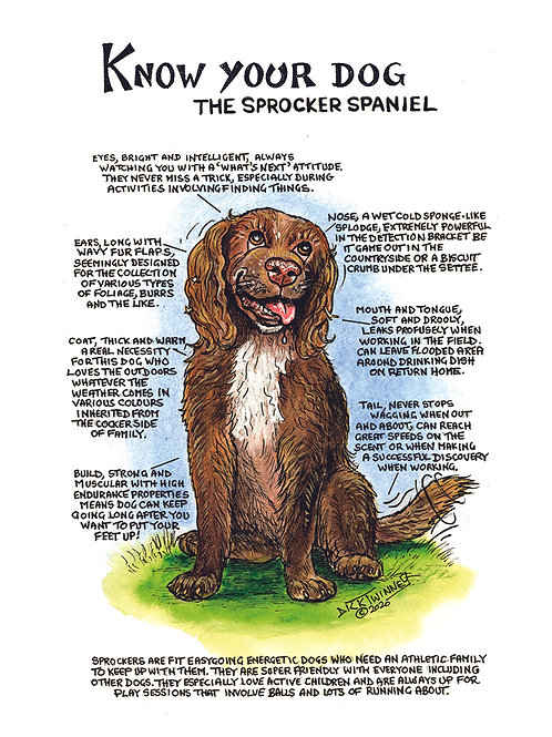Sprocker Spaniel - Greetings Card - Know Your Dog - Pack of 6