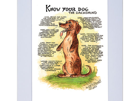 Dachshund - A4 Mounted Print - Know Your Dog - Pack of 6