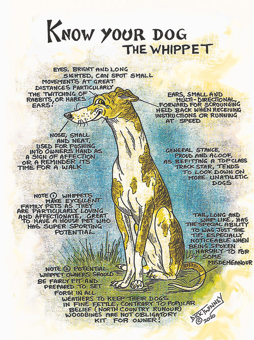 Whippet - Wall Plaque - Know Your Dog - Pack of 6