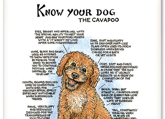 Cavapoo - 3D Wall Plaque - Know Your Dog - Pack of 6