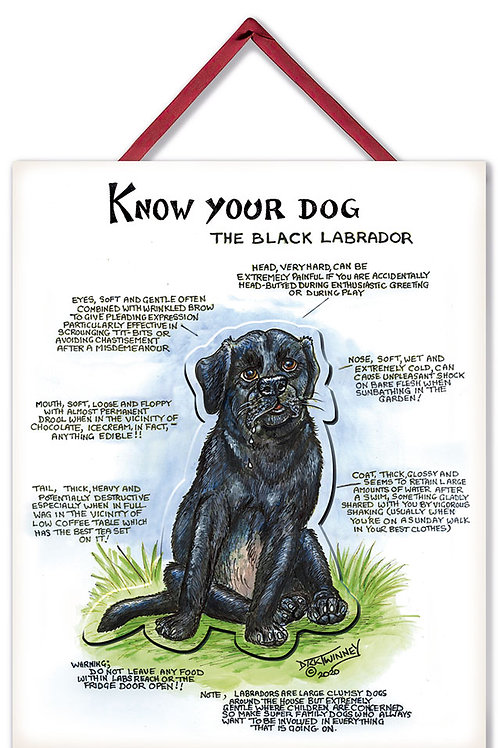 Black Labrador - 3D Wall Plaque - Know Your Dog - Pack of 6