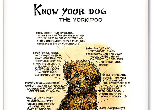 Yorkipoo - 3D Wall Plaque - Know Your Dog - Pack of 6