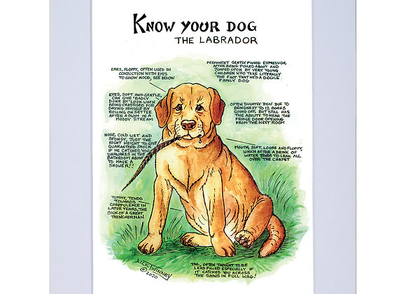 Labrador - A4 Mounted Print - Know Your Dog - Pack of 6