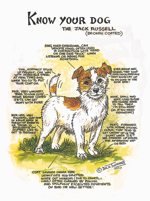 Jack Rusell Rough Coated - Wall Plaque - Know Your Dog - Pack of 6