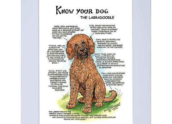 Labradoodle  - A4 Mounted Print - Know Your Dog - Pack of 6