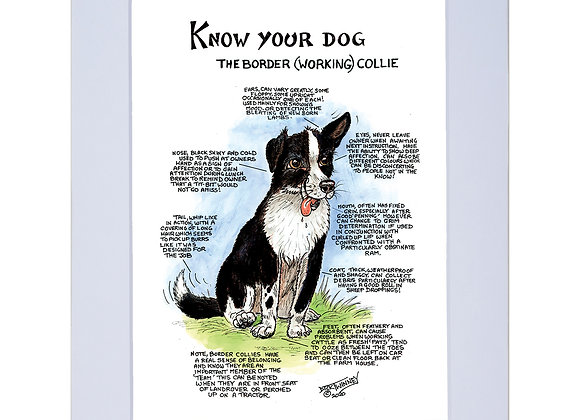 Border Collie - A4 Mounted Print - Know Your Dog - Pack of 6