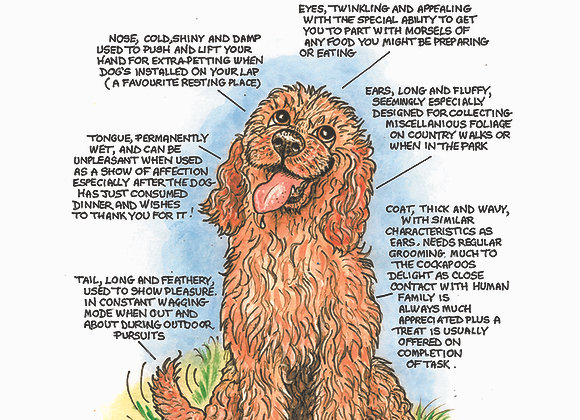 Cockapoo - Greetings Card - Know Your Dog - Pack of 6