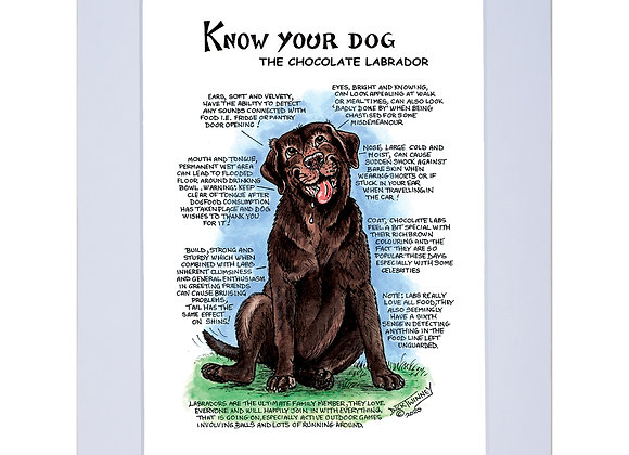 Chocolate Labrador - A4 Mounted Print - Know Your Dog - Pack of 6