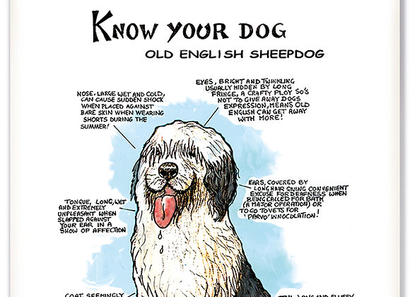 Old English Sheep Dog - 3D Wall Plaque - Know Your Dog - Pack of 6