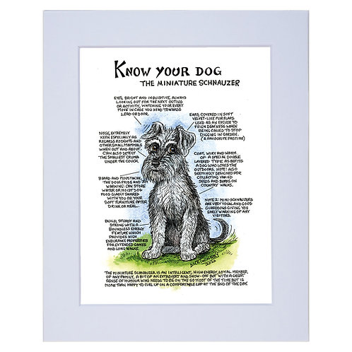 Miniature Schnauzer - A4 Mounted Print - Know Your Dog - Pack of 6