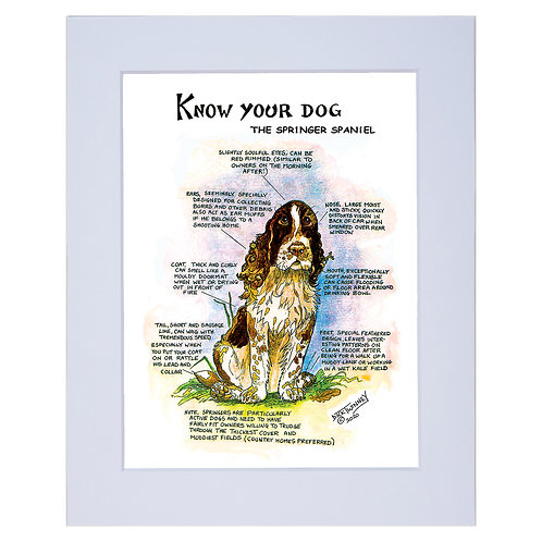 Springer Spaniel - A4 Mounted Print - Know Your Dog - Pack of 6