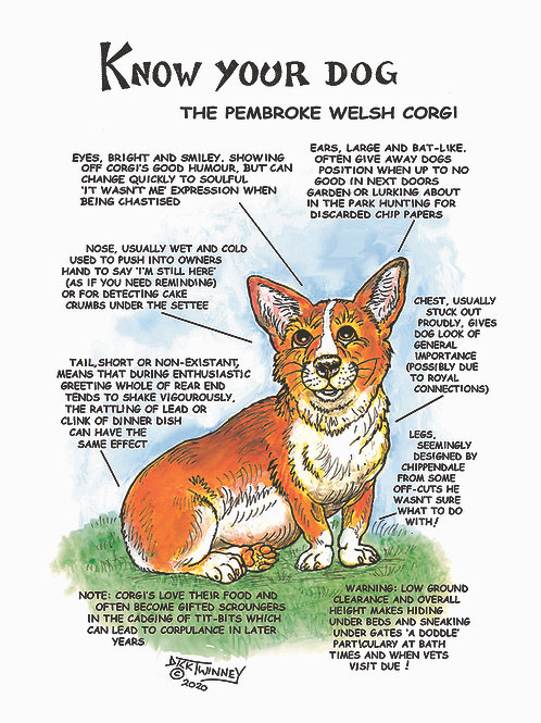 Corgi - Wall Plaque - Know Your Dog - Pack of 6