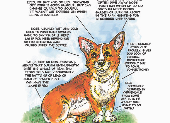 Corgi - Greetings Card - Know Your Dog - Pack of 6