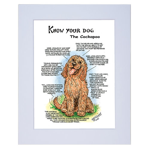 Cockapoo - A4 Mounted Print - Know Your Dog - Pack of 6