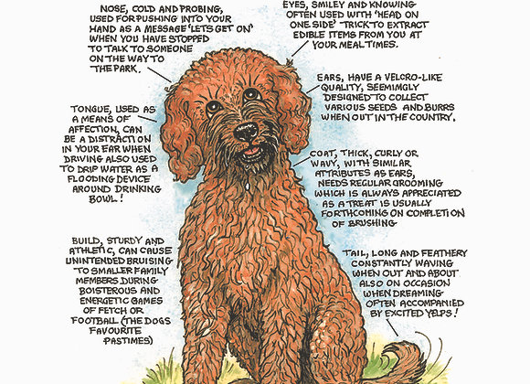 Labradoodle - Greetings Card - Know Your Dog - Pack of 6
