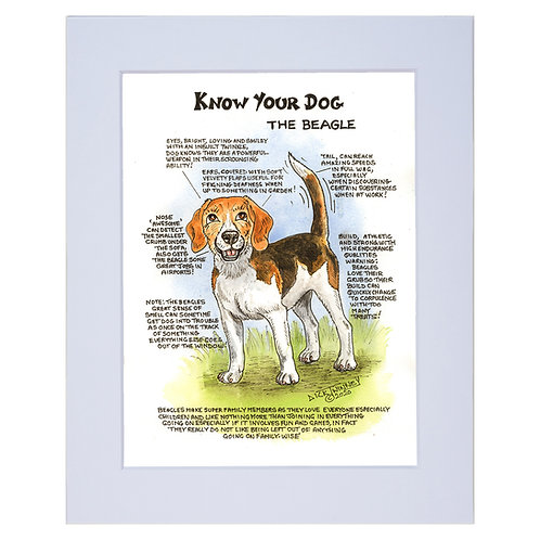 Beagle - A4 Mounted Print - Know Your Dog - Pack of 6
