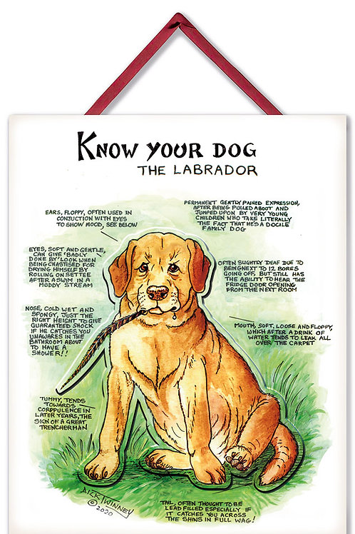 Labrador - 3D Wall Plaque - Know Your Dog - Pack of 6
