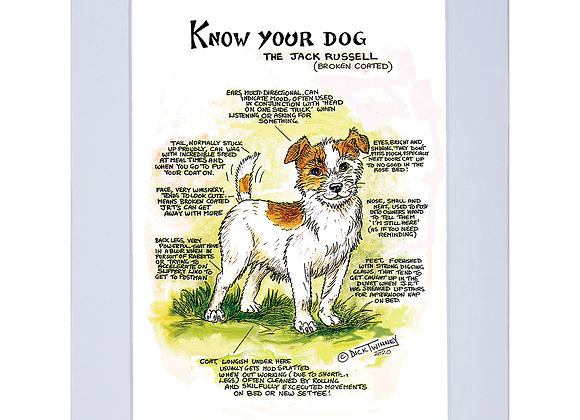 Jack Rusell Rough Coated  - A4 Mounted Print - Know Your Dog - Pack of 6