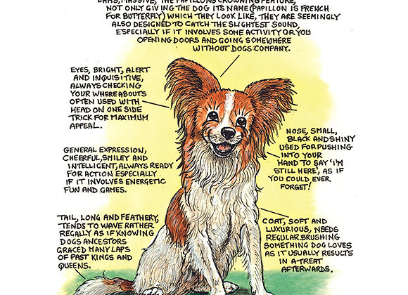 Papillion - Wall Plaque - Know Your Dog - Pack of 6