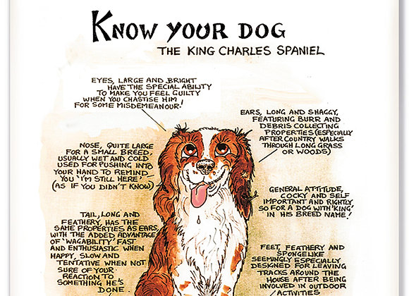 Kings Charles Spaniel - 3D Wall Plaque - Know Your Dog - Pack of 6