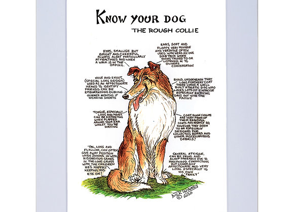 Rough Collie - A4 Mounted Print - Know Your Dog - Pack of 6