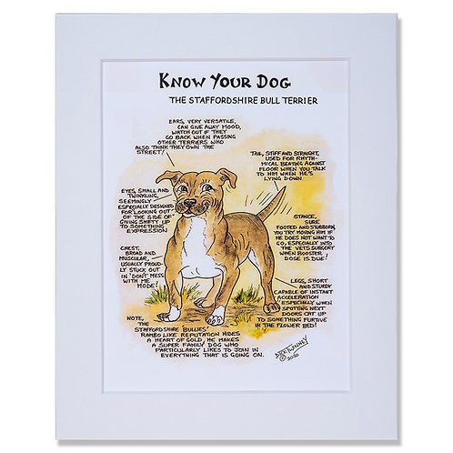 Staffordshire Bull Terrier - A4 Mounted Print - Know Your Dog - Pack of 6