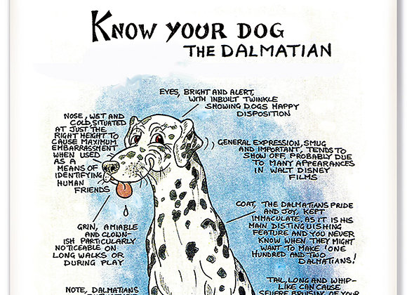Dalmation - 3D Wall Plaque - Know Your Dog - Pack of 6